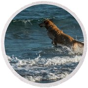 Water Dog Delray Beach Florida Round Beach Towel