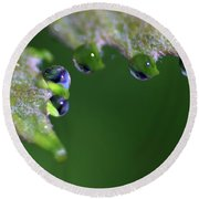 Round Beach Towel featuring the photograph Water Droplet IIi by Richard Rizzo