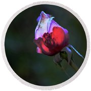 Water Droplets On The Rose Round Beach Towel