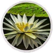 Water Lily 15-3 Round Beach Towel