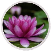 Water Lily After Rain Round Beach Towel by Shelly Gunderson