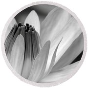 Water Lily Opening Round Beach Towel