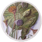 Water Lily Seed Pods Framed By A Leaf Round Beach Towel