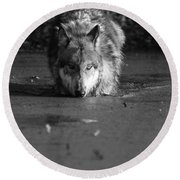 Water Wolf I Round Beach Towel