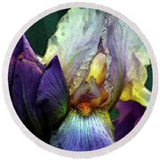 Watercolor Cream And Purple Bearded Iris With Bud 0065 W_2 Round Beach Towel