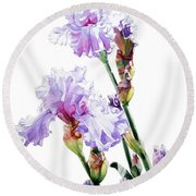 Watercolor Of A Tall Bearded Iris I Call Lilac Iris Wendi Round Beach Towel
