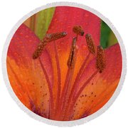Watered Lily Round Beach Towel by Jean Noren