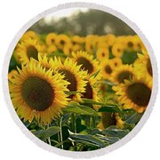 Waving Sunflowers In A Field Round Beach Towel