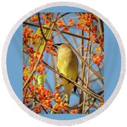Waxwing Heaven Round Beach Towel by Amy Porter