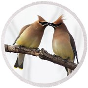Waxwings In Love Round Beach Towel by Mircea Costina Photography