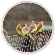 Waxwings In The Rain Round Beach Towel
