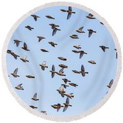 Round Beach Towel featuring the photograph Waxwings by Mircea Costina Photography