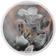 Round Beach Towel featuring the photograph We Fade To Grey Freesia's by Lance Sheridan-Peel