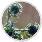 Weed Flower 5 Of 5 Round Beach Towel by Tina M Wenger