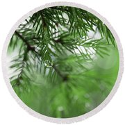 Weeping Pine 2 Round Beach Towel