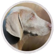 Weimaraner Adult - Painting Round Beach Towel