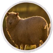 Welsh Lamb In Sunny Sauce Round Beach Towel