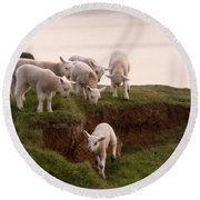 Welsh Lambs Round Beach Towel