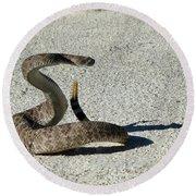 Western Diamondback Rattlesnake Round Beach Towel by Skeeze