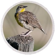 Round Beach Towel featuring the photograph Western Meadowlark by Gary Lengyel