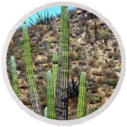 Western Mexican Cactus Tree Round Beach Towel