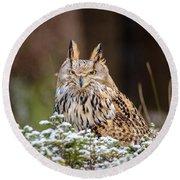 Western Siberian Owl Round Beach Towel