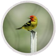Western Tanager At The Ranch Round Beach Towel