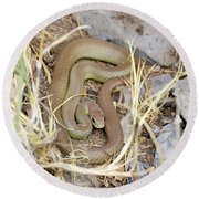 Western Yellow-bellied Racer, Coluber Constrictor Round Beach Towel