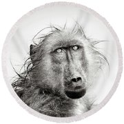 Wet Baboon Portrait Round Beach Towel