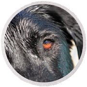Wet Black Lab Round Beach Towel