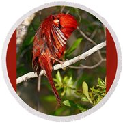 Wet Cardinal Round Beach Towel