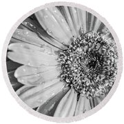 Round Beach Towel featuring the photograph Wet Daisy In Monochrome by SR Green