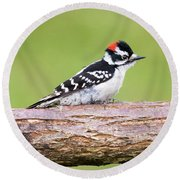 Round Beach Towel featuring the photograph Wet Downy Woodpecker  by Ricky L Jones