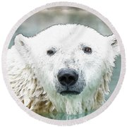 Wet Polar Bear Round Beach Towel