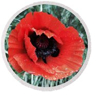Wet Poppy Round Beach Towel