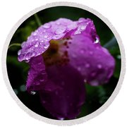 Round Beach Towel featuring the photograph Wet Wild Rose by Darcy Michaelchuk