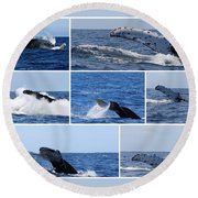 Whale Action Round Beach Towel