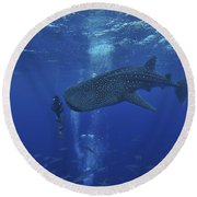Whale Shark And Diver, Maldives Round Beach Towel