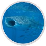 Whale Shark, Ari And Male Atoll Round Beach Towel