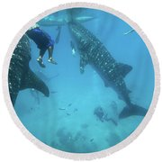 Whale Sharks Round Beach Towel