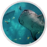 Whale-sharks Round Beach Towel by Barbara Bowen