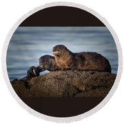 Round Beach Towel featuring the photograph Whats For Dinner by Randy Hall