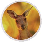 Round Beach Towel featuring the photograph What's Up, Yanchep National Park by Dave Catley
