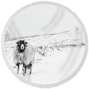 Which Way Is South? Round Beach Towel by Janet Burdon