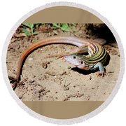 Round Beach Towel featuring the photograph Whiptail Lizard by Sheila Brown