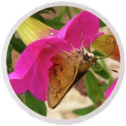 Whirl-about Skipper Butterfly Round Beach Towel by Donna Brown