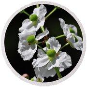 White And Green Wildflowers Round Beach Towel