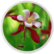 Round Beach Towel featuring the photograph White And Red Columbine  by James Steele