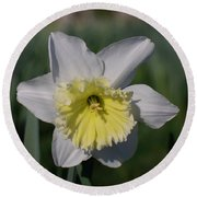 White And Yellow Daffodil Round Beach Towel