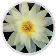 White And Yellow Water Lily Round Beach Towel